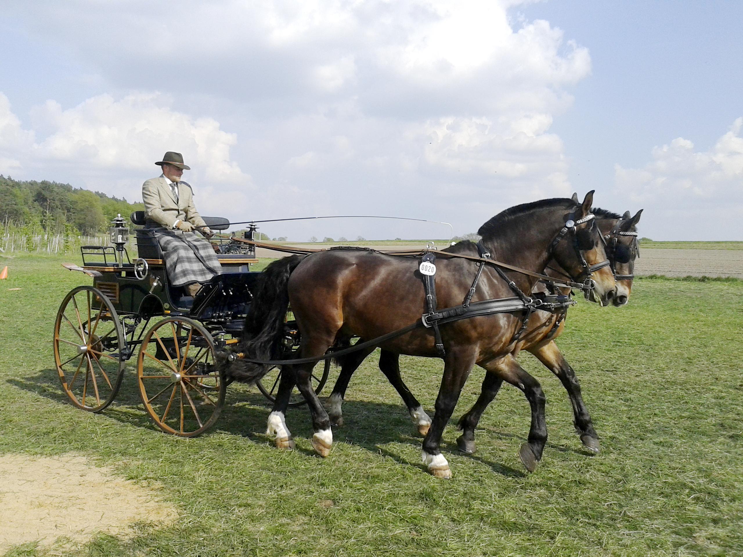 Pferd-und-Wagen-Versicherung-Fahrbetriebe